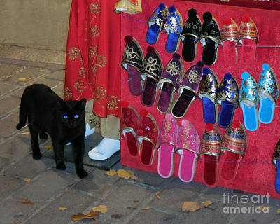 Photograph - Black Cat Is Shopping by Haleh Mahbod