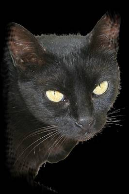 Black Cat Isolated On Black Background Art Print by Tracey Harrington-Simpson
