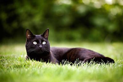 Black Cat Lying In Garden Art Print