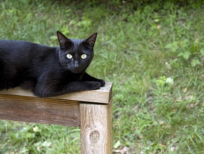 Photograph - Black Cat by Melinda Fawver