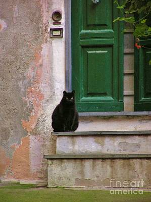Photograph - Black Cat by Michele Penner