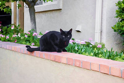 Digital Art - Black Cat On A Ledge by Photographic Art by Russel Ray Photos
