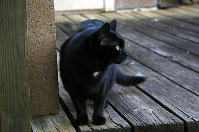 Photograph - Black Cat On Porch by Melinda Fawver