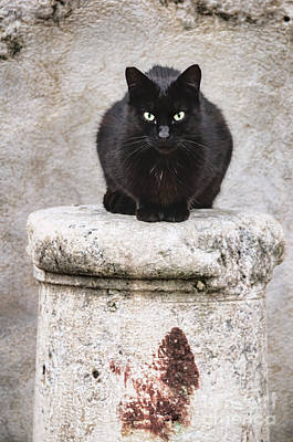 Black Cat Photograph - Black Cat On Stone Pedestal by Oscar Gutierrez