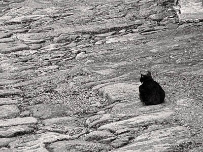Photograph - Black Cat On Weathered Cobblestones by Menega Sabidussi