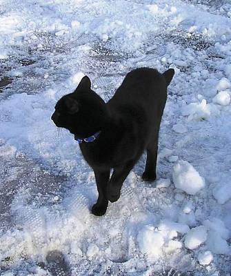 Painting - Black Cat Out In The Cold  by Karen Jane Jones