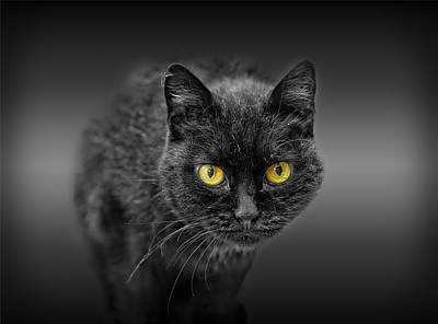 Photograph - Black Cat by Peter Lakomy