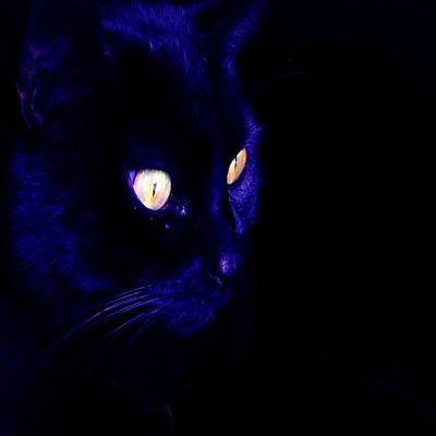 Photograph - Black Cat Photograph Halloween Eyes by Tracey Harrington-Simpson