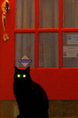 Black Cat Red Door Art Print by DerekTXFactor Creative