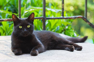Photograph - Black Cat Resting by Melinda Fawver