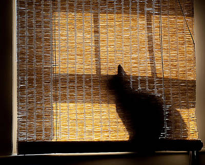Photograph - Black Cat by Rick Mosher