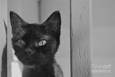 Photograph - Black Cat by Photography by Tiwago