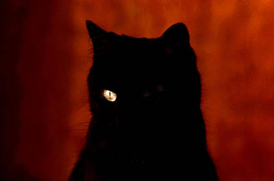 Photograph - Black Cat - Yellow Eye by Robert  Rodvik