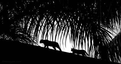 Photograph - Black Cats by Britt Runyon