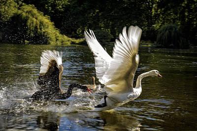 White River Scene Photograph - Black Chases White by Paul W Sharpe Aka Wizard of Wonders