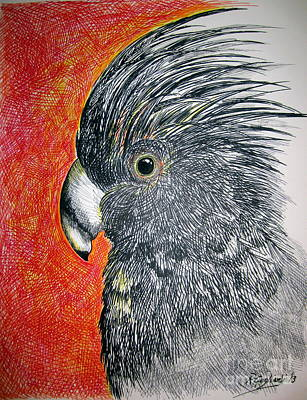 Cockatoo Drawing - Black Cockatoo by Roberto Gagliardi