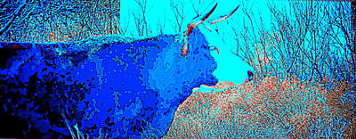 Photograph - Black Cow In Blue by Jessica Wright
