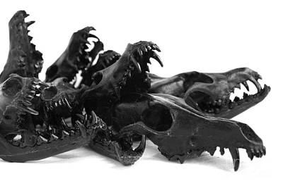 Black Coyote Skulls Set 2 Art Print