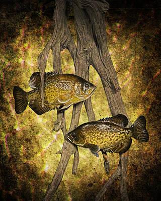 Black Crappies A Fish Image No 0143 Amber Version Art Print by Randall Nyhof