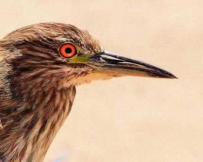 Photograph - Black Crowned Night Heron 4 by Bob and Nadine Johnston