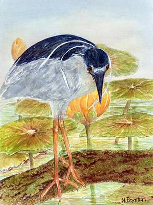 Wildlife Painting - Black-crowned Night Heron by Hannah Boynton