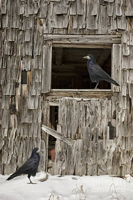 Photograph - Black Crows At The Old Barn by Edward Fielding