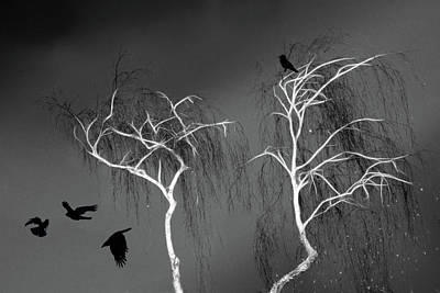 Art Print featuring the photograph Black Crows - White Trees  by Richard Piper
