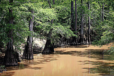 Photograph - Black Cypress Creek by Betty Northcutt