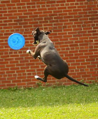 Photograph - Black Dog Catcher by Mustafa Abdullah
