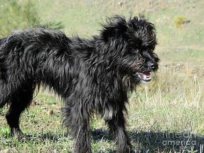 Photograph - Black Dog In Salobrena by Chani Demuijlder