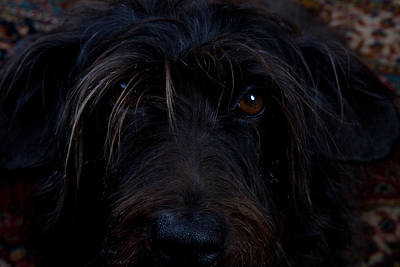 Photograph - Black Dog by Scott Sanders