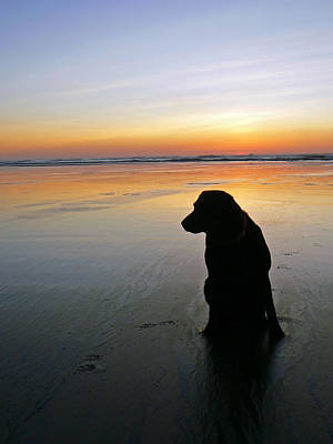 Black Dog Sundown Art Print