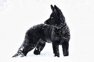 Black Dog White Snow Original by Richard Cruttwell