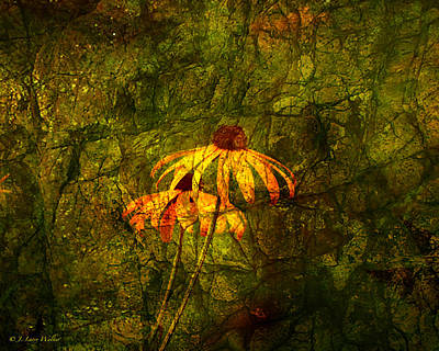 Black-eyed Susan Abstract Art Print by J Larry Walker