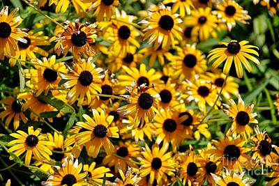 Photograph - Black Eyed Susan  by AK Photography
