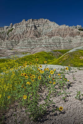 Balck Art Photograph - Black-eyed Susan Flowers In The Badlands by Randall Nyhof