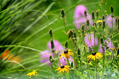 Photograph - Garden Flowers In Summer by Karen Adams