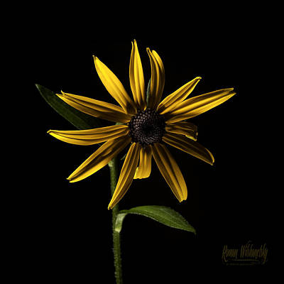 Photograph - Black Eyed Susan by Roman Wilshanetsky