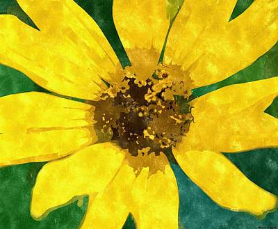 Nature Center Drawing - Black Eyed Susan by Rosemarie E Seppala
