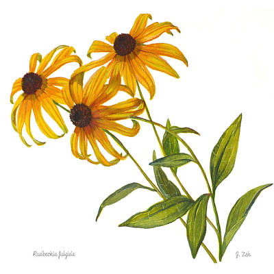 Painting - Black Eyed Susan - Rudbeckia Fulgida by Janet Zeh