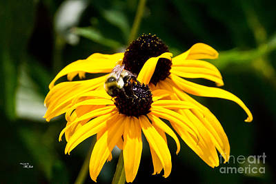 Photograph - Black-eyed Susan - Rudbeckia Hirta by Ms Judi