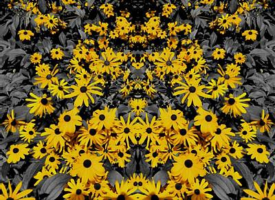 Photograph - Black Eyed Susan Summer by Dan Sproul
