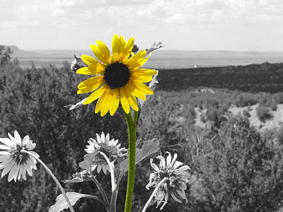 Art Print featuring the photograph Black-eyed Susan by Tom DiFrancesca