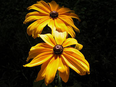 Valerie Paterson Wall Art - Photograph - Black-eyed Susan by Valerie Paterson