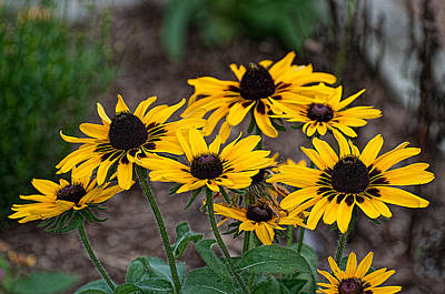 Keith Richards - Black Eyed Susans by Photos By  Cassandra
