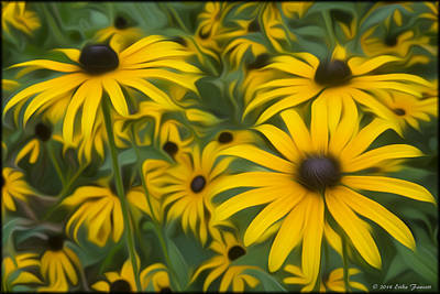 Photograph - Black Eyed Susans by Erika Fawcett