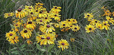 Photograph - Black-eyed Susans In The Grass 2 by Rob Huntley