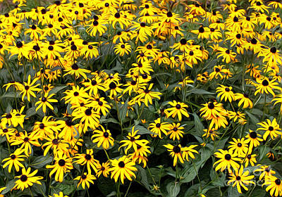 Photograph - Black Eyed Susans by Lena Auxier