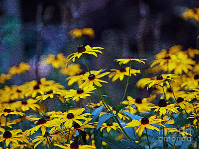 Black-eyed Susans Art Print by Patricia Griffin Brett
