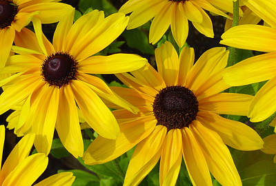 Autumn Leaves Rights Managed Images - Black Eyed Susans Royalty-Free Image by Suzanne Gaff